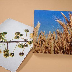 Torchon Fine Art Prints | Deckled Edge (left) | Without Deckled Edge (right)